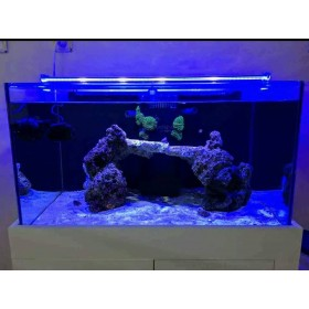 Aqua LED ROYAL MAVİ ( 450 NM )